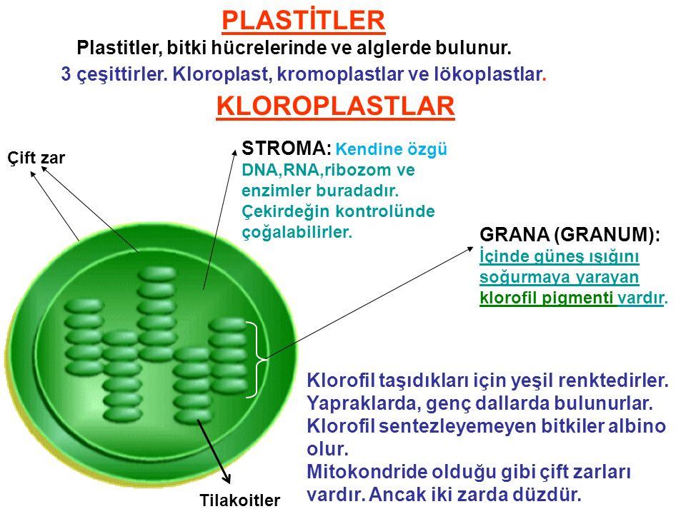 PLASTİTLER 3 çeşittirler.Kloroplast, kromoplastlar ve lökoplastlar.