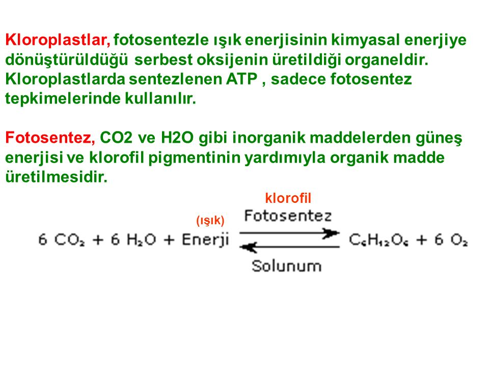 (ışık) klorofil Kloroplastlar, fotosentezle ışık enerjisinin kimyasal enerjiye dönüştürüldüğü serbest oksijenin üretildiği organeldir.