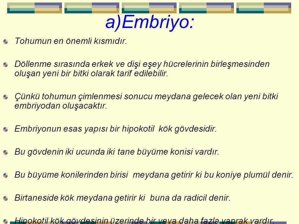 a)Embriyo: Tohumun en önemli kısmıdır. Döllenme sırasında erkek ve dişi eşey hücrelerinin birleşmesinden oluşan yeni bir bitki olarak tarif edilebilir