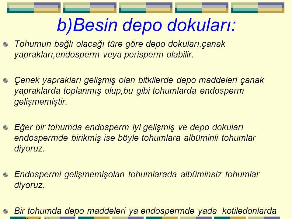 b)Besin depo dokuları: Tohumun bağlı olacağı türe göre depo dokuları,çanak yaprakları,endosperm veya perisperm olabilir. Çenek yaprakları gelişmiş ola