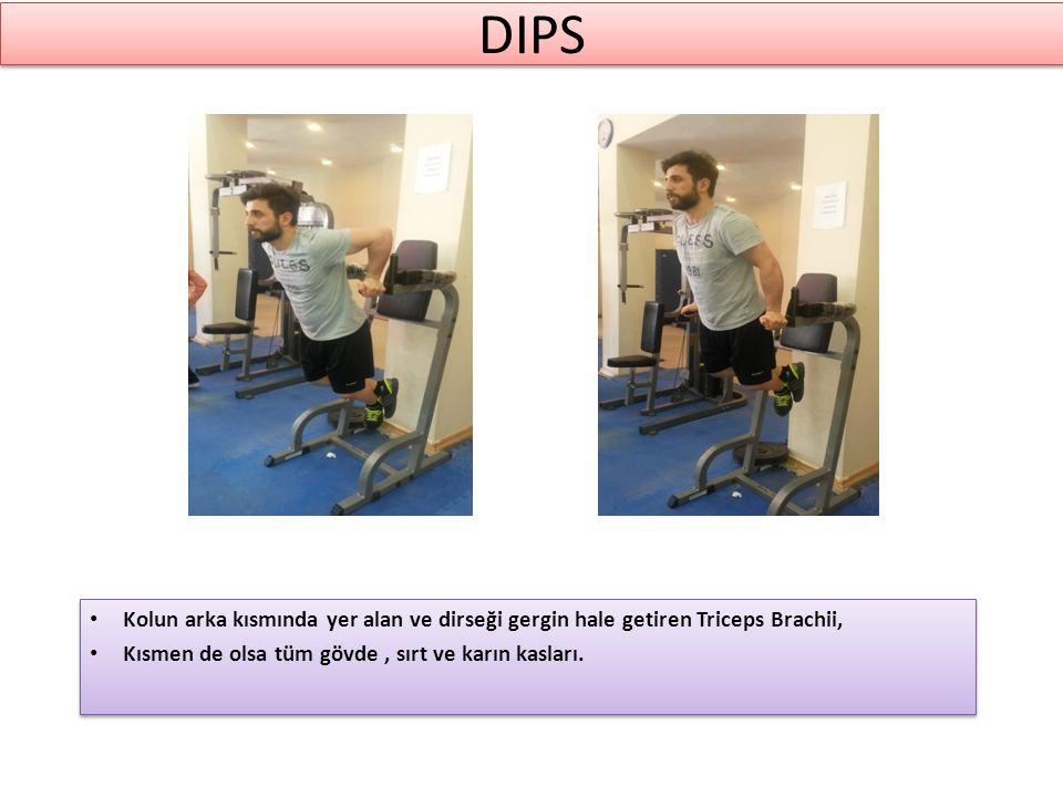 DIPS Kolun arka kısmında yer alan ve dirseği gergin hale getiren Triceps Brachii, Kısmen de olsa tüm gövde, sırt ve karın kasları.