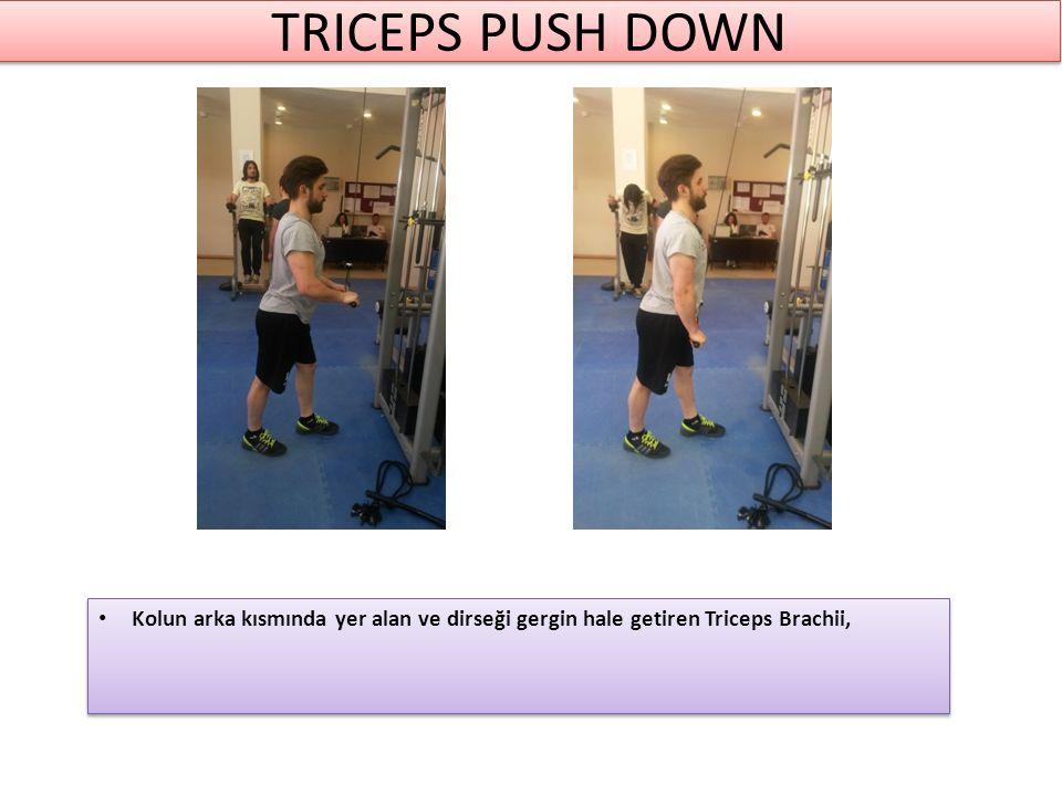 TRICEPS PUSH DOWN Kolun arka kısmında yer alan ve dirseği gergin hale getiren Triceps Brachii,