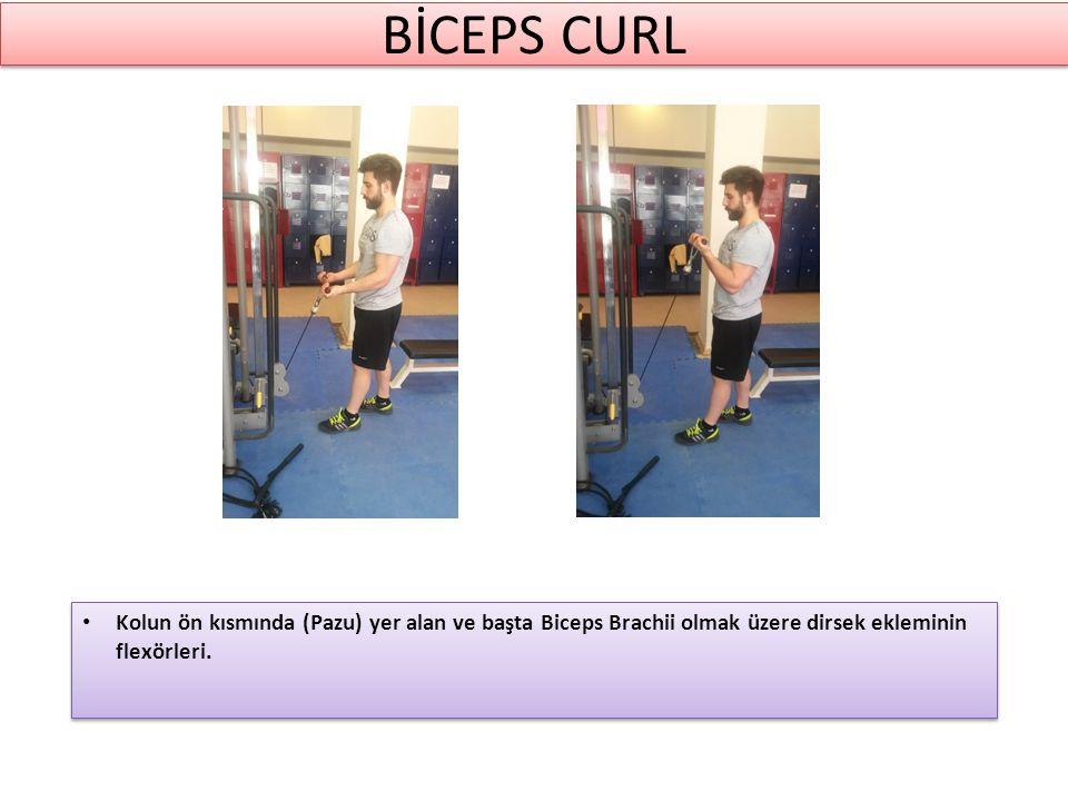 BİCEPS CURL Kolun ön kısmında (Pazu) yer alan ve başta Biceps Brachii olmak üzere dirsek ekleminin flexörleri.