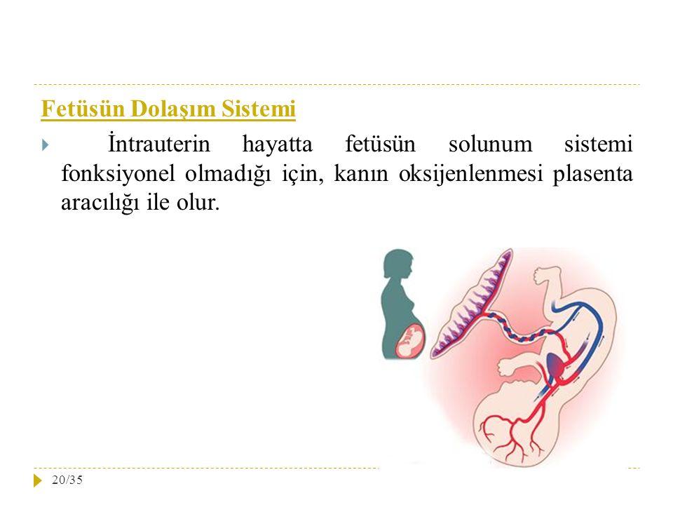 Fetüsün Dolaşım Sistemi  İntrauterin hayatta fetüsün solunum sistemi fonksiyonel olmadığı için, kanın oksijenlenmesi plasenta aracılığı ile olur. 20/