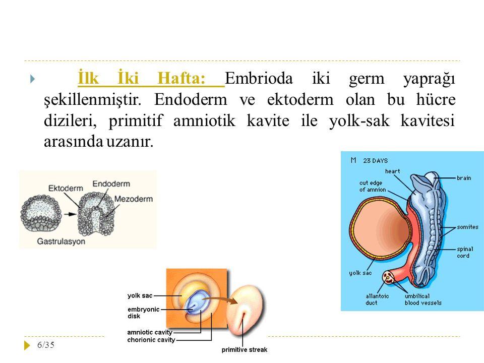  İlk İki Hafta: Embrioda iki germ yaprağı şekillenmiştir. Endoderm ve ektoderm olan bu hücre dizileri, primitif amniotik kavite ile yolk-sak kavitesi