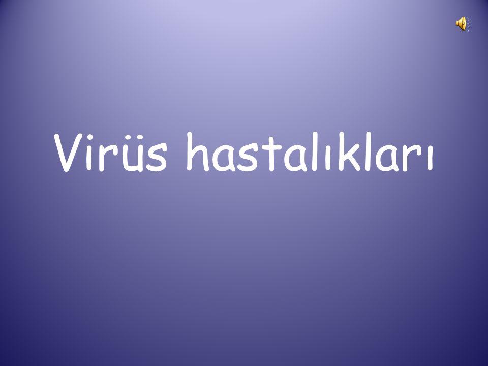 Virüs hastalıkları