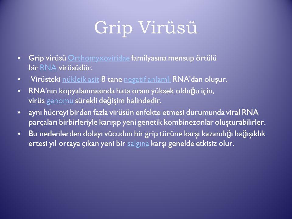 Grip Virüsü Grip virüsü Orthomyxoviridae familyasına mensup örtülü bir RNA virüsüdür.OrthomyxoviridaeRNA Virüsteki nükleik asit 8 tane negatif anlamlı RNA dan oluşur.