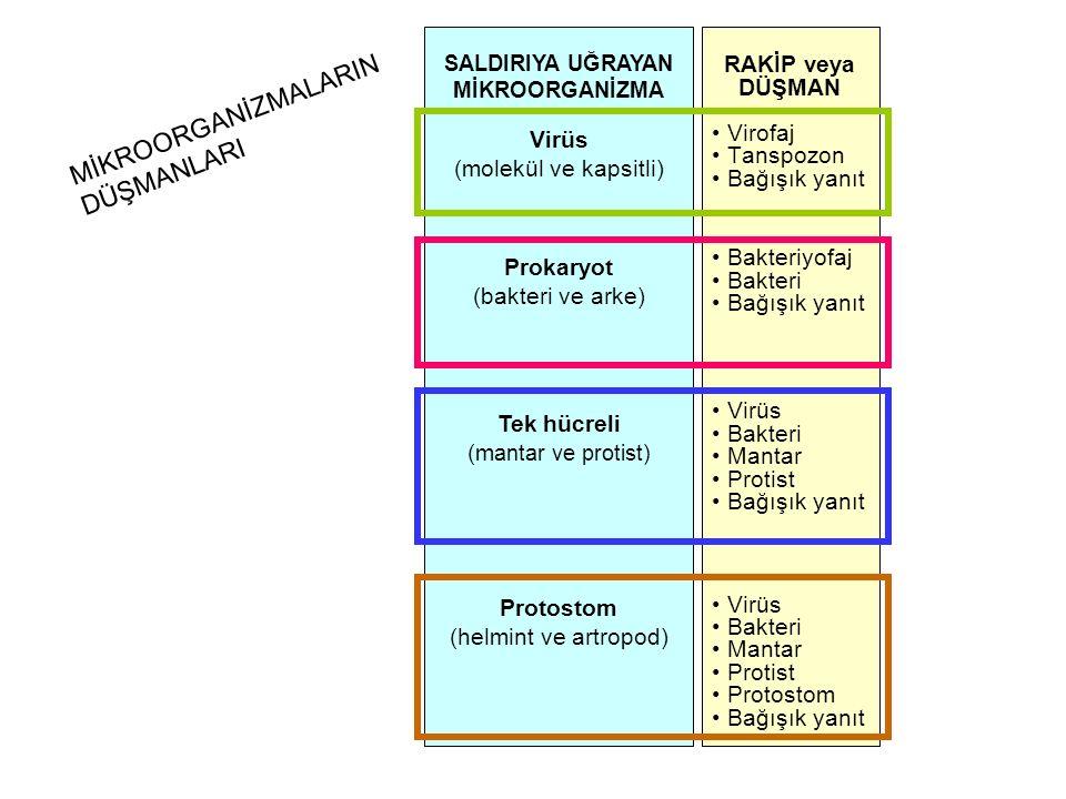 RAKİP veya DÜŞMAN Virofaj Tanspozon Bağışık yanıt Bakteriyofaj Bakteri Bağışık yanıt Virüs Bakteri Mantar Protist Bağışık yanıt Virüs Bakteri Mantar P