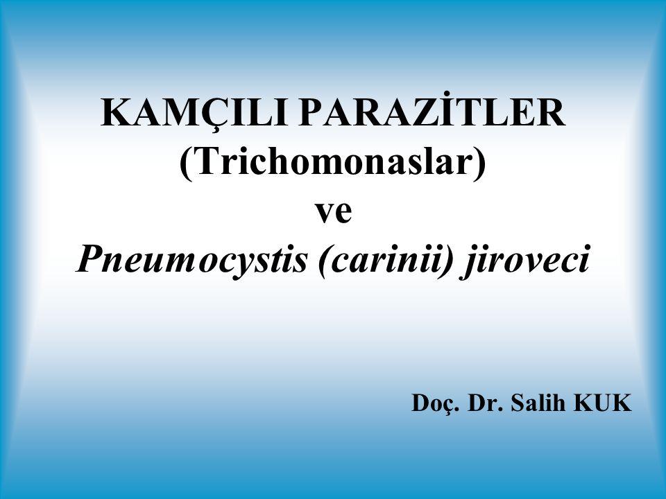 4 kamçı Dalgalı zar parazitin 2/3'ü kadar Trofozoit 5-12 µm 4 kamçı Dalgalı zar parazitin 1/3'ü kadar Trofozoit 5-14 µm 3-5 kamçı Dalgalı zar parazitin 2/3'ü kadar Trofozoit 7-32 µm
