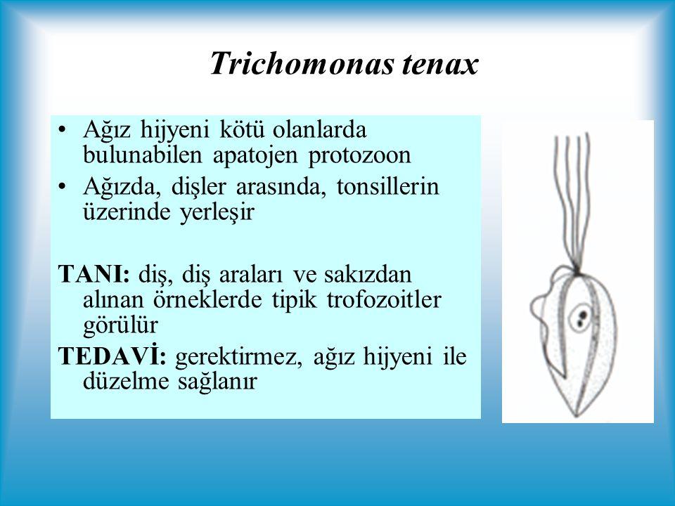 Trichomonas tenax Ağız hijyeni kötü olanlarda bulunabilen apatojen protozoon Ağızda, dişler arasında, tonsillerin üzerinde yerleşir TANI: diş, diş araları ve sakızdan alınan örneklerde tipik trofozoitler görülür TEDAVİ: gerektirmez, ağız hijyeni ile düzelme sağlanır