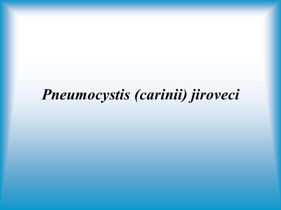 Pneumocystis (carinii) jiroveci