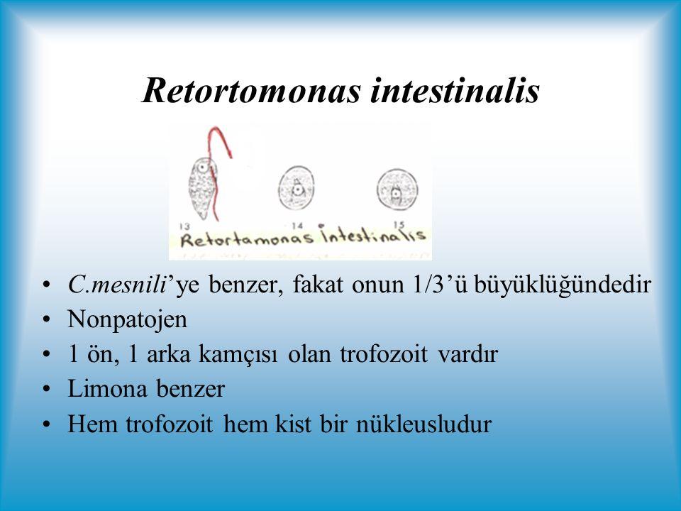Retortomonas intestinalis C.mesnili'ye benzer, fakat onun 1/3'ü büyüklüğündedir Nonpatojen 1 ön, 1 arka kamçısı olan trofozoit vardır Limona benzer Hem trofozoit hem kist bir nükleusludur