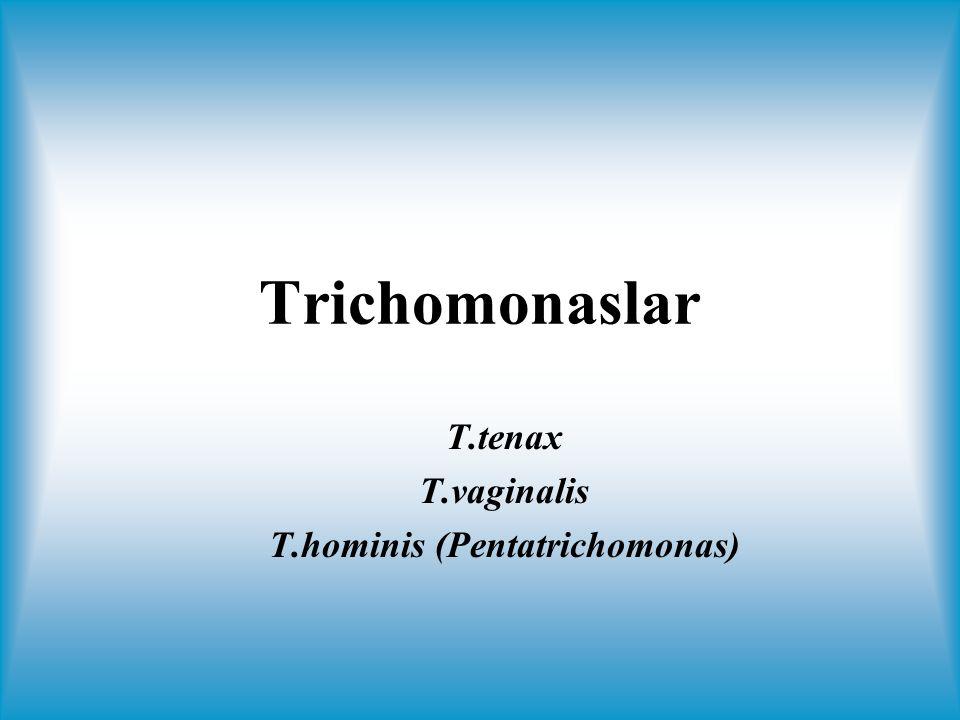 Trichomonas vaginalis Kadın ve erkek ürogenital sistemine yerleşir Cinsel yolla bulaşır, anneden bebeğe bulaşabilmektedir 18-40 yaşlarında sık Dünyada kadınlarda % 10-25 Yılda 200 milyondan fazla insanı enfekte eder ???