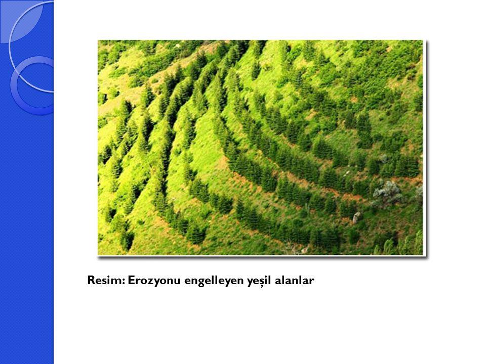 Resim: Erozyonu engelleyen yeşil alanlar