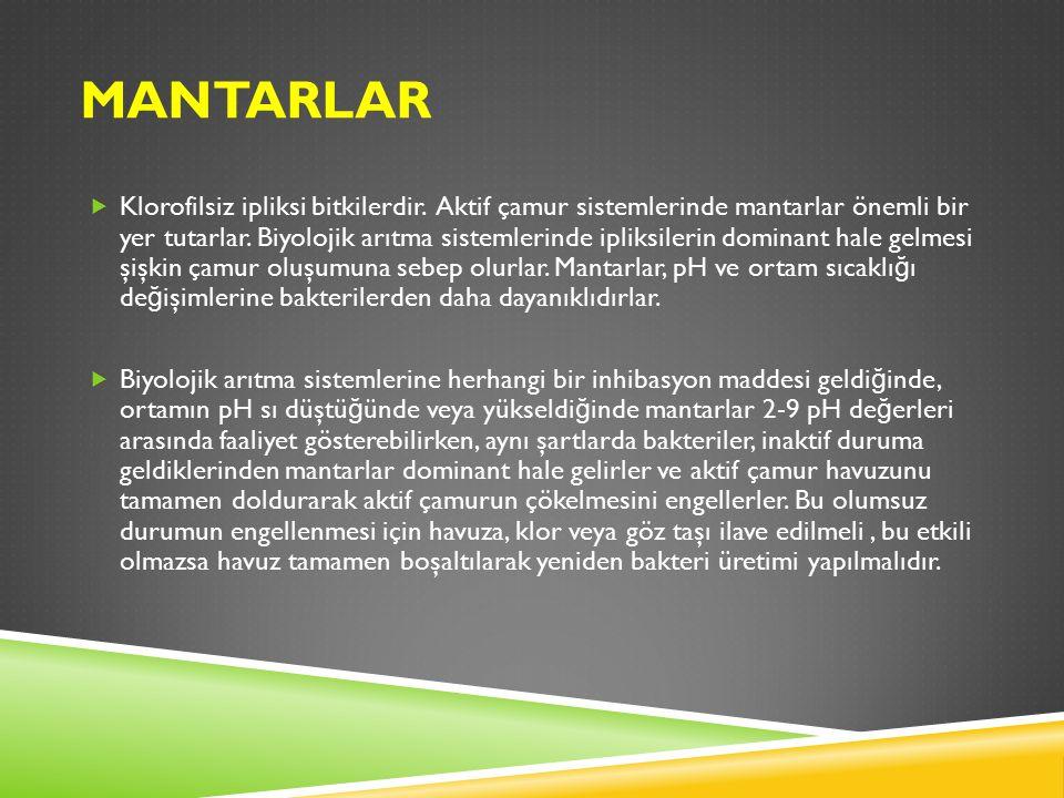 MANTARLAR  Klorofilsiz ipliksi bitkilerdir.