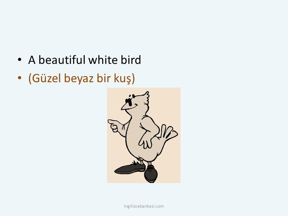 A beautiful white bird (Güzel beyaz bir kuş) ingilizcebankasi.com