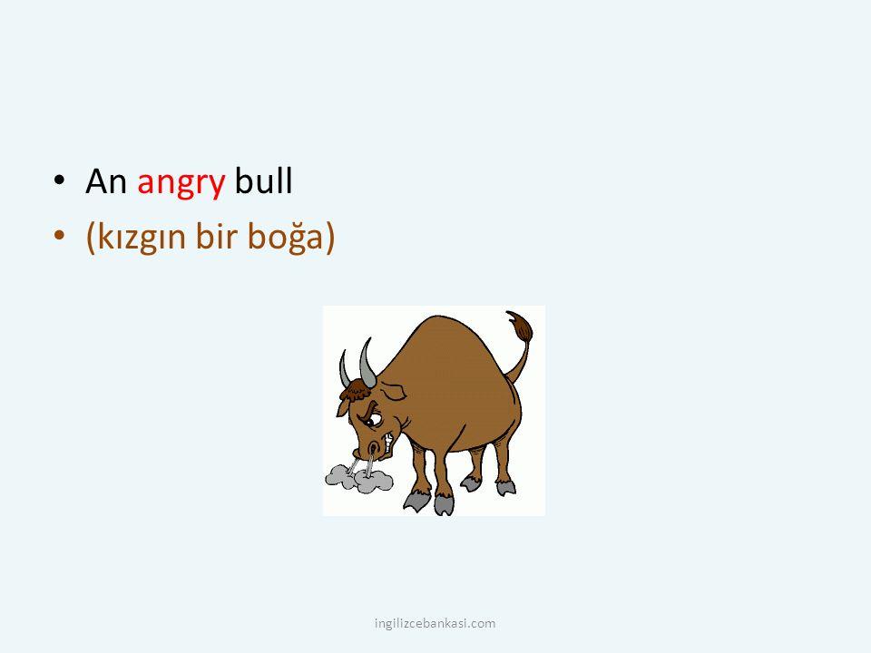An angry bull (kızgın bir boğa) ingilizcebankasi.com