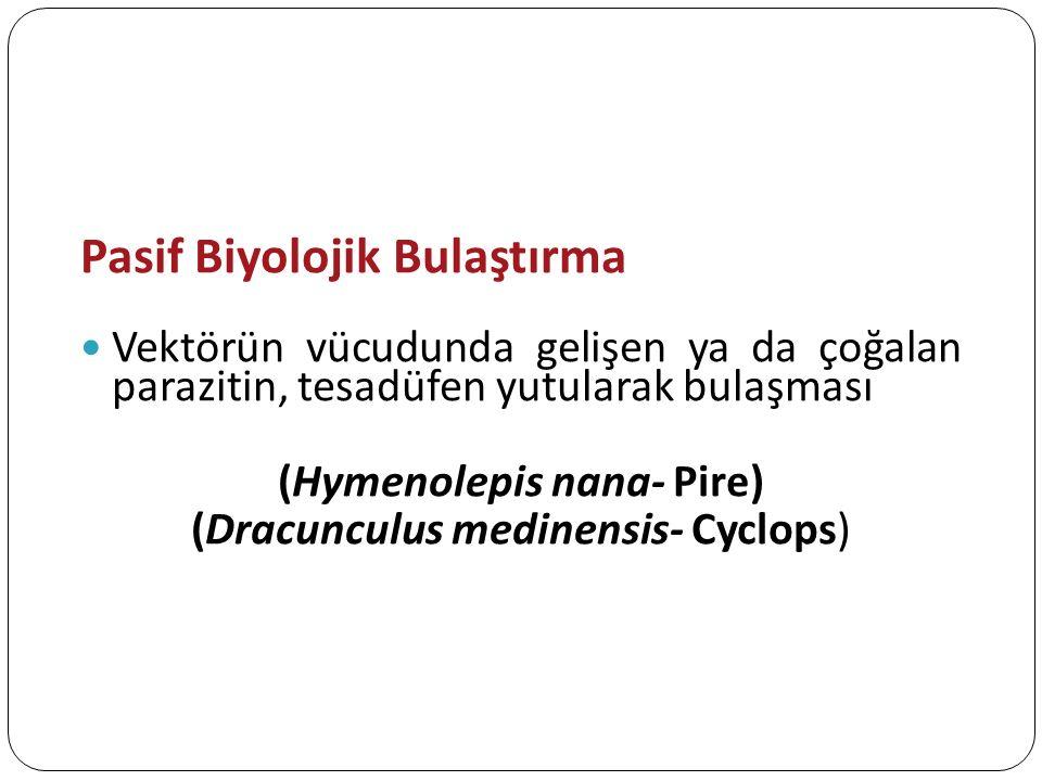 Pasif Biyolojik Bulaştırma Vektörün vücudunda gelişen ya da çoğalan parazitin, tesadüfen yutularak bulaşması (Hymenolepis nana- Pire) (Dracunculus med