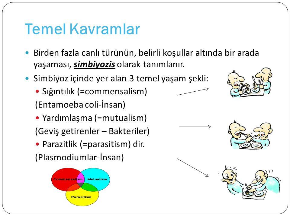 Pasif Biyolojik Bulaştırma Vektörün vücudunda gelişen ya da çoğalan parazitin, tesadüfen yutularak bulaşması (Hymenolepis nana- Pire) (Dracunculus medinensis- Cyclops)