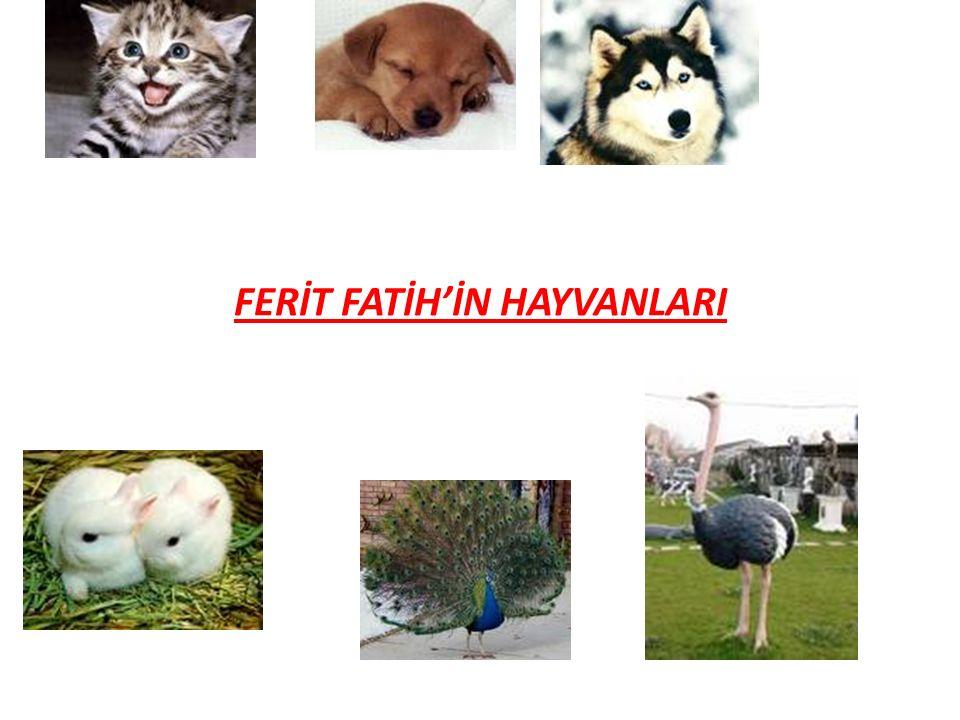 Kedi;Ablamın en sevdiği evcil hayvandır.Kuş ve fare yemeyi sever.