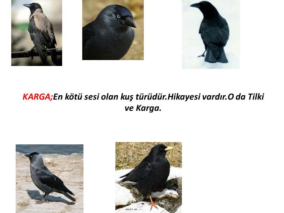 KARGA;En kötü sesi olan kuş türüdür.Hikayesi vardır.O da Tilki ve Karga.