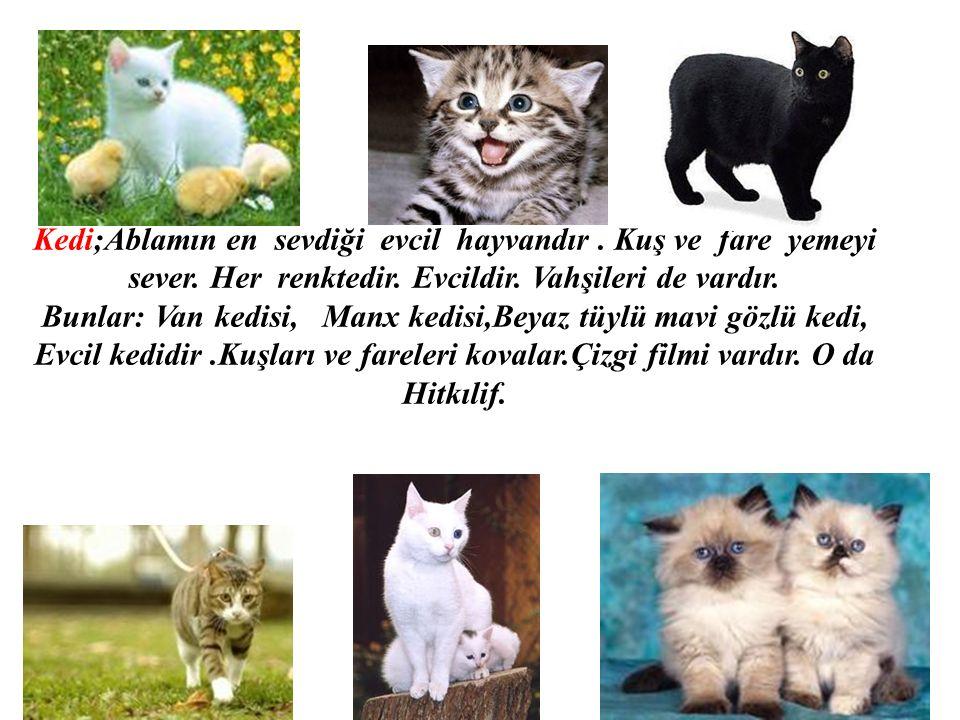 Kedi;Ablamın en sevdiği evcil hayvandır. Kuş ve fare yemeyi sever. Her renktedir. Evcildir. Vahşileri de vardır. Bunlar: Van kedisi, Manx kedisi,Beyaz