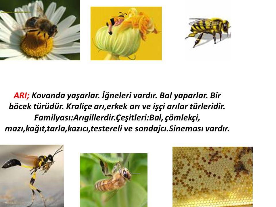 ARI; Kovanda yaşarlar. İğneleri vardır. Bal yaparlar. Bir böcek türüdür. Kraliçe arı,erkek arı ve işçi arılar türleridir. Familyası:Arıgillerdir.Çeşit