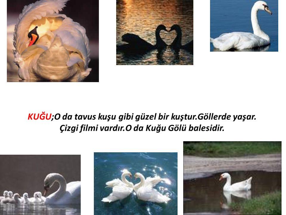 KUĞU;O da tavus kuşu gibi güzel bir kuştur.Göllerde yaşar. Çizgi filmi vardır.O da Kuğu Gölü balesidir.