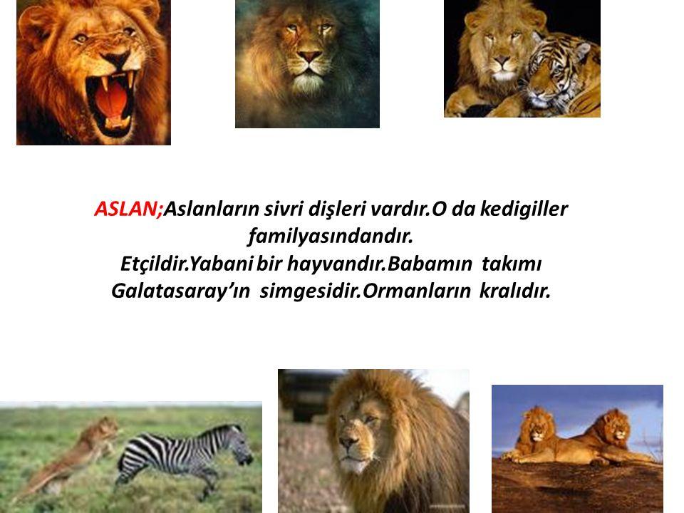 ASLAN;Aslanların sivri dişleri vardır.O da kedigiller familyasındandır. Etçildir.Yabani bir hayvandır.Babamın takımı Galatasaray'ın simgesidir.Ormanla