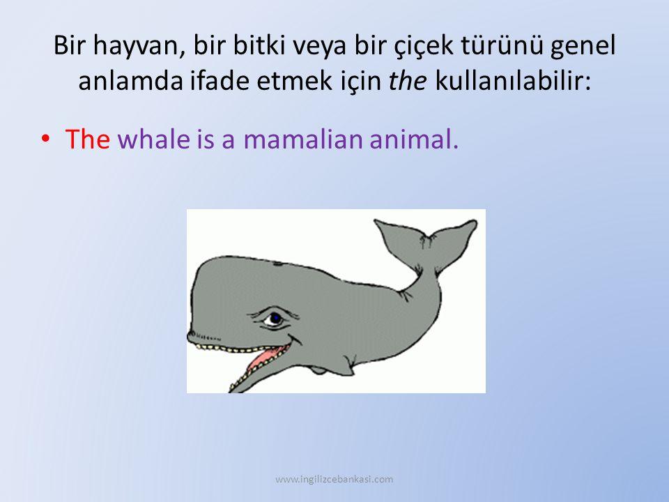 Bir hayvan, bir bitki veya bir çiçek türünü genel anlamda ifade etmek için the kullanılabilir: The whale is a mamalian animal. www.ingilizcebankasi.co