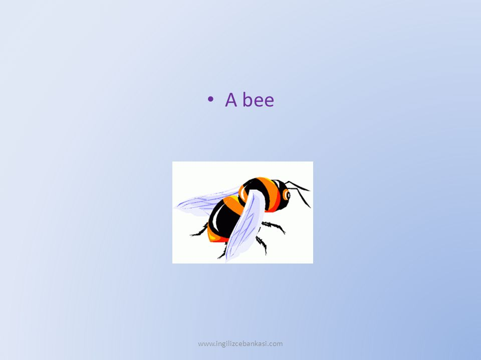 A bee www.ingilizcebankasi.com
