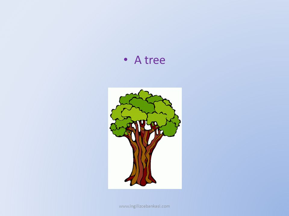 A tree www.ingilizcebankasi.com