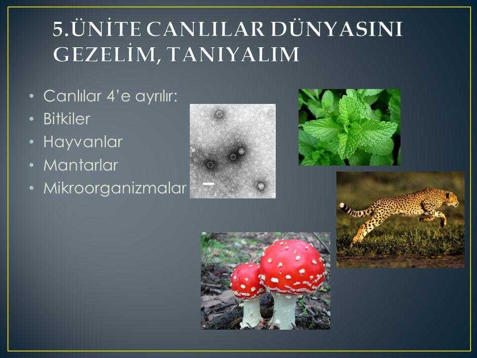 Canlılar 4'e ayrılır: Bitkiler Hayvanlar Mantarlar Mikroorganizmalar