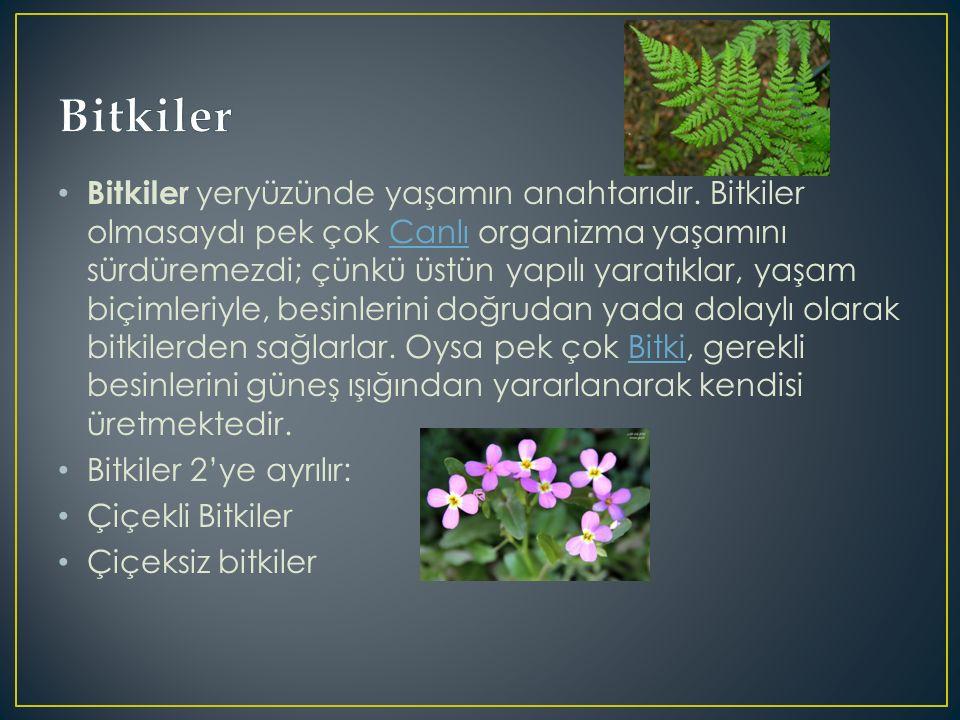 Bitkiler yeryüzünde yaşamın anahtarıdır.