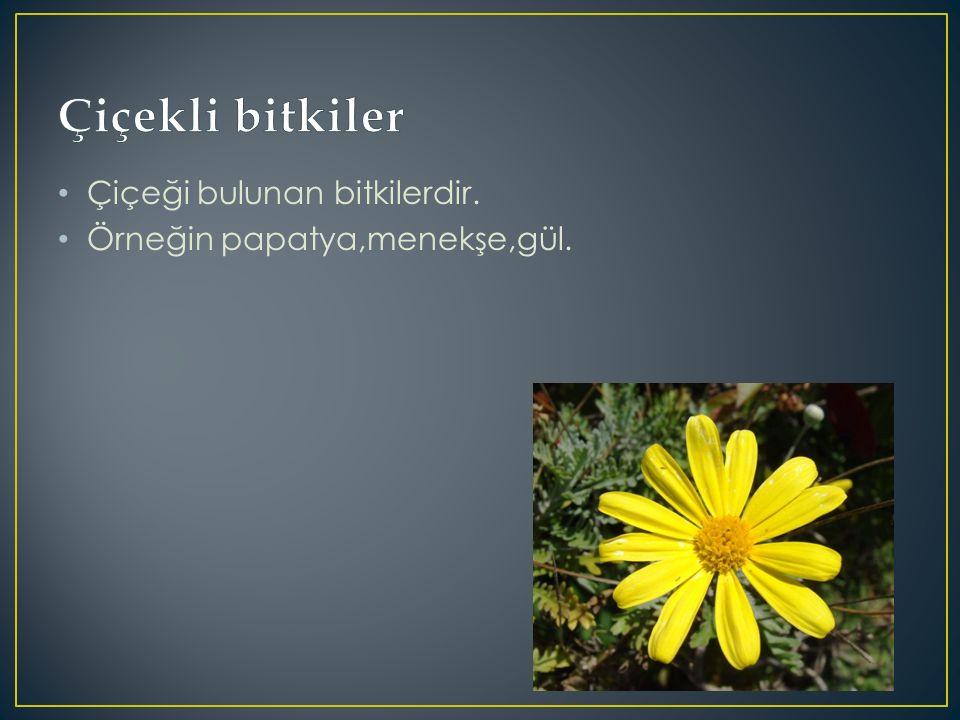 Çiçeği bulunan bitkilerdir. Örneğin papatya,menekşe,gül.