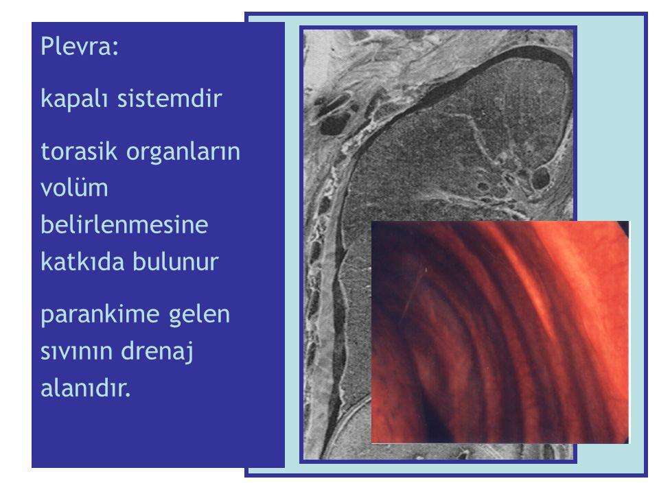 Patolojik düzeyde plevral sıvı nasıl oluşur: