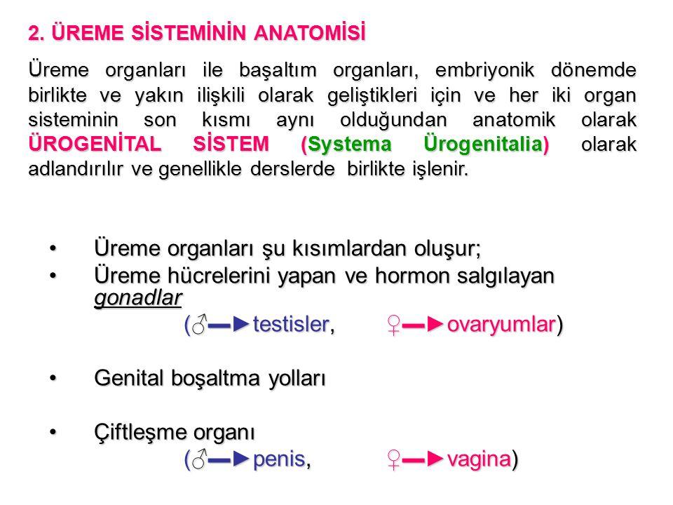 Üreme organları şu kısımlardan oluşur;Üreme organları şu kısımlardan oluşur; Üreme hücrelerini yapan ve hormon salgılayan gonadlarÜreme hücrelerini yapan ve hormon salgılayan gonadlar (♂▬►testisler, ♀▬►ovaryumlar) Genital boşaltma yollarıGenital boşaltma yolları Çiftleşme organıÇiftleşme organı (♂▬►penis, ♀▬►vagina) 2.