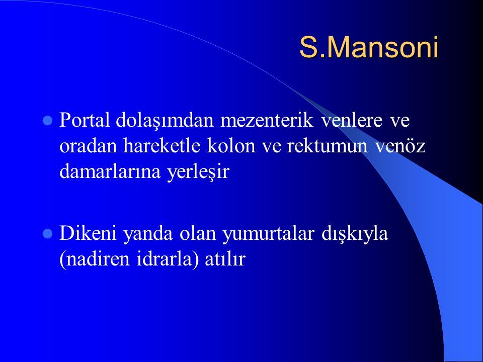 S.Mansoni S.Mansoni Portal dolaşımdan mezenterik venlere ve oradan hareketle kolon ve rektumun venöz damarlarına yerleşir Dikeni yanda olan yumurtalar dışkıyla (nadiren idrarla) atılır
