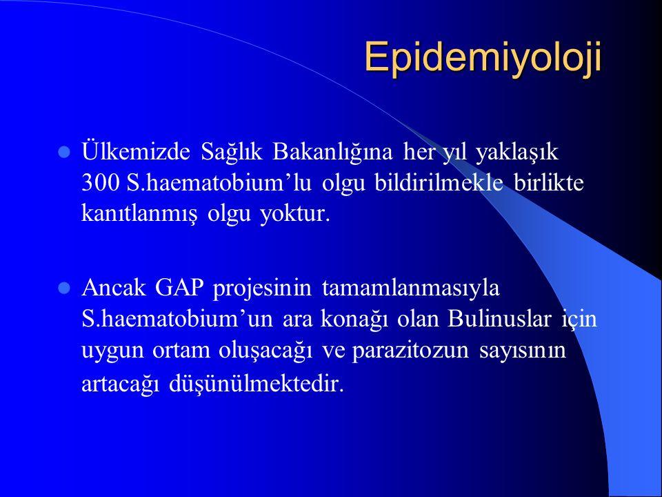 Epidemiyoloji Epidemiyoloji Ülkemizde Sağlık Bakanlığına her yıl yaklaşık 300 S.haematobium'lu olgu bildirilmekle birlikte kanıtlanmış olgu yoktur.