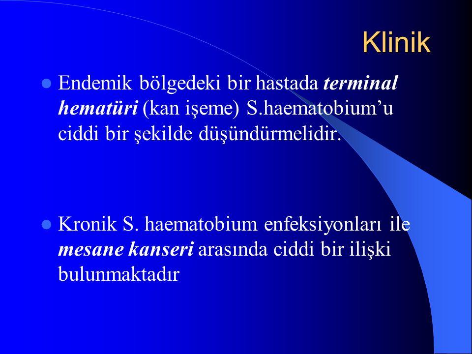 Klinik Klinik Endemik bölgedeki bir hastada terminal hematüri (kan işeme) S.haematobium'u ciddi bir şekilde düşündürmelidir.
