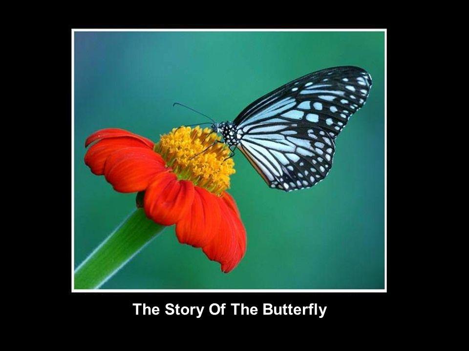 The Story Of The Butterfly La Lección De La Mariposa Bir Kelebeğin Dersi LÜTFEN OKU ARKADAŞINA GÖNDER ZİNCİRİ BOZMA…