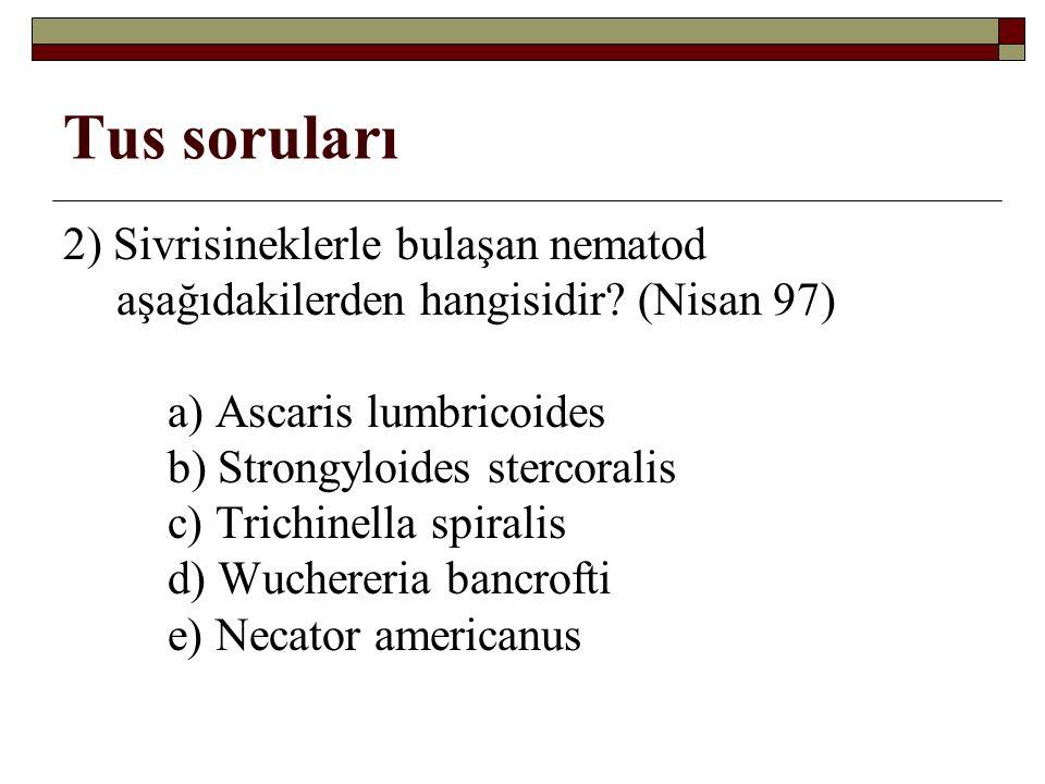 Tus soruları 2) Sivrisineklerle bulaşan nematod aşağıdakilerden hangisidir.