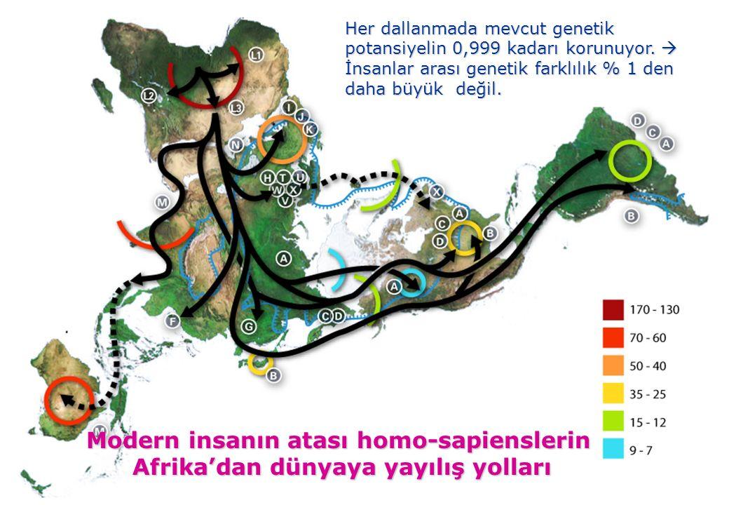 olu insanı genetik olarak yaklaşık 1/3 oranında asyalı, 2/3 oranında avrupalı kavimlerin karışımındandır.. Modern insanın atası homo-sapienslerin Afri