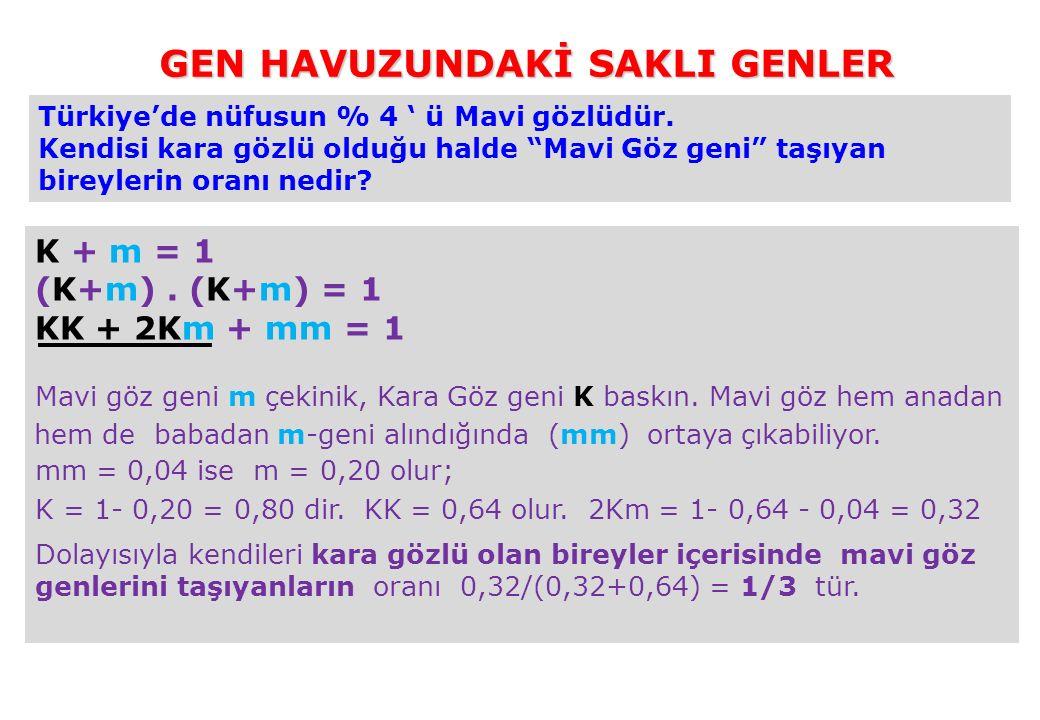 """Türkiye'de nüfusun % 4 ' ü Mavi gözlüdür. Kendisi kara gözlü olduğu halde """"Mavi Göz geni"""" taşıyan bireylerin oranı nedir? K + m = 1 (K+m). (K+m) = 1 K"""