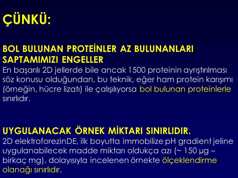 ÇÜNKÜ: BOL BULUNAN PROTEİNLER AZ BULUNANLARI SAPTAMIMIZI ENGELLER En başarılı 2D jellerde bile ancak 1500 proteinin ayrıştırılması söz konusu olduğundan, bu teknik, eğer ham protein karışımı (örneğin, hücre lizatı) ile çalışılıyorsa bol bulunan proteinlerle sınırlıdır.