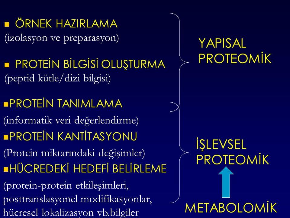 ÖRNEK HAZIRLAMA (izolasyon ve preparasyon) PROTEİN BİLGİSİ OLUŞTURMA (peptid kütle/dizi bilgisi) YAPISAL PROTEOMİK PROTEİN TANIMLAMA (informatik veri değerlendirme) PROTEİN KANTİTASYONU (Protein miktarındaki değişimler) HÜCREDEKİ HEDEFİ BELİRLEME (protein-protein etkileşimleri, posttranslasyonel modifikasyonlar, hücresel lokalizasyon vb.bilgiler İŞLEVSEL PROTEOMİK METABOLOMİK