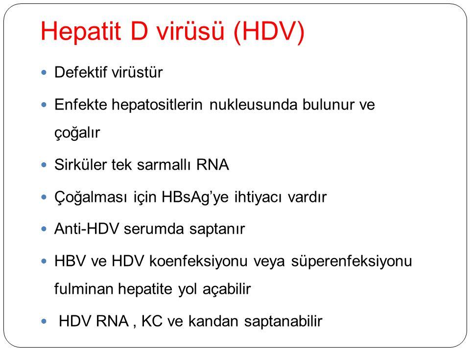 Hepatit D virüsü (HDV) Defektif virüstür Enfekte hepatositlerin nukleusunda bulunur ve çoğalır Sirküler tek sarmallı RNA Çoğalması için HBsAg'ye ihtiyacı vardır Anti-HDV serumda saptanır HBV ve HDV koenfeksiyonu veya süperenfeksiyonu fulminan hepatite yol açabilir HDV RNA, KC ve kandan saptanabilir