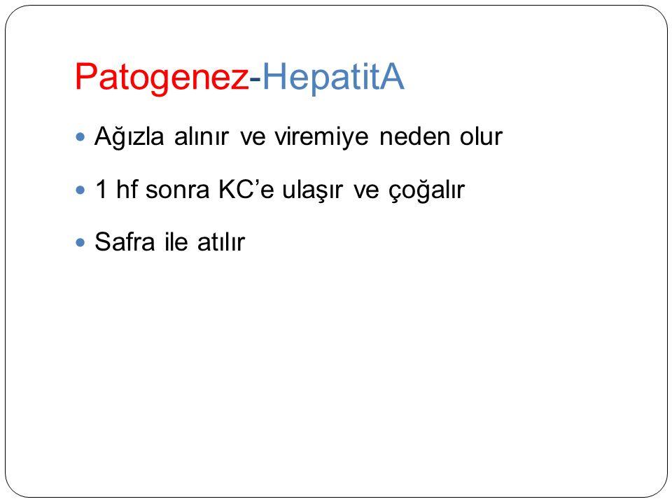 Patogenez-HepatitA Ağızla alınır ve viremiye neden olur 1 hf sonra KC'e ulaşır ve çoğalır Safra ile atılır