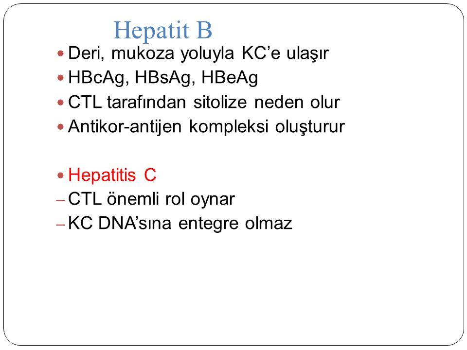 Deri, mukoza yoluyla KC'e ulaşır HBcAg, HBsAg, HBeAg CTL tarafından sitolize neden olur Antikor-antijen kompleksi oluşturur Hepatitis C – CTL önemli rol oynar – KC DNA'sına entegre olmaz Hepatit B