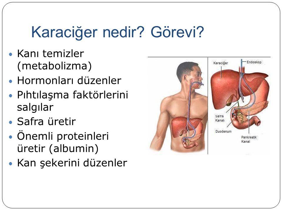 Karaciğer nedir. Görevi.